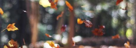 Falling Leaves Unsplash CC0